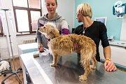 Šestnáct týraných psů našli místní strážníci spolu s veterinářkou v domě v Ivančicích. Pro šest z nich už bylo pozdě.