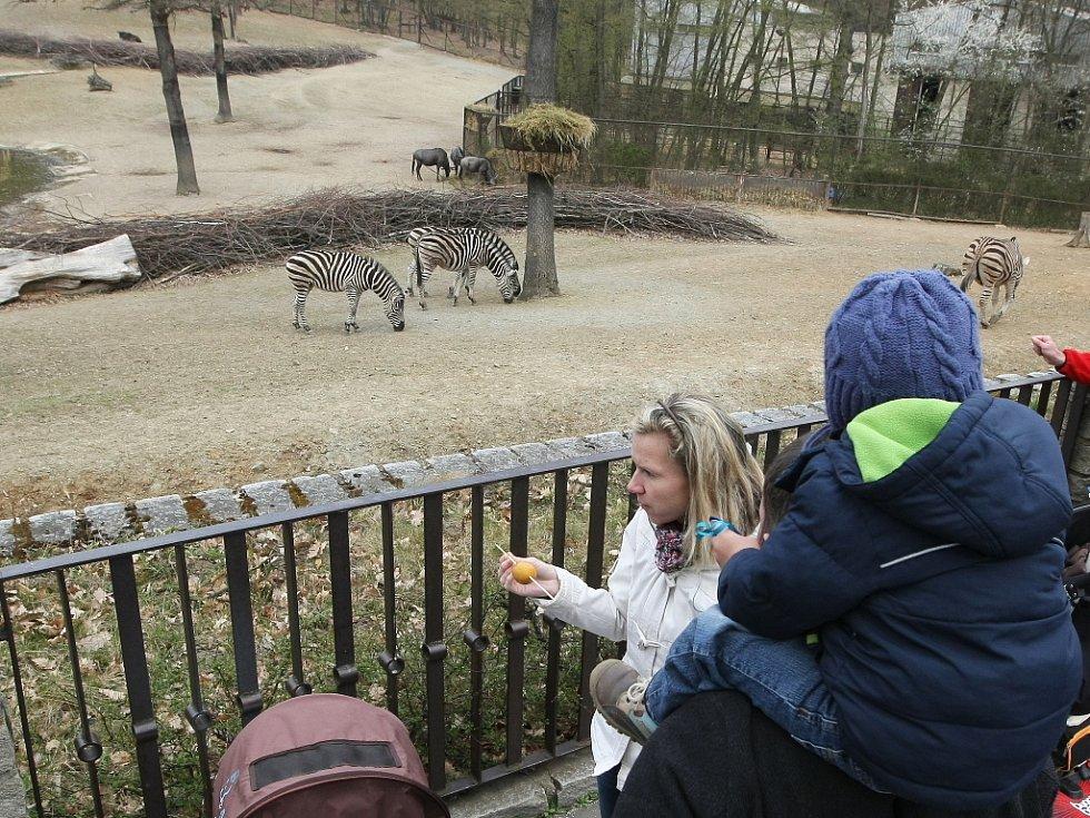 Brněnská zoologická zahrada - ilustrační foto.