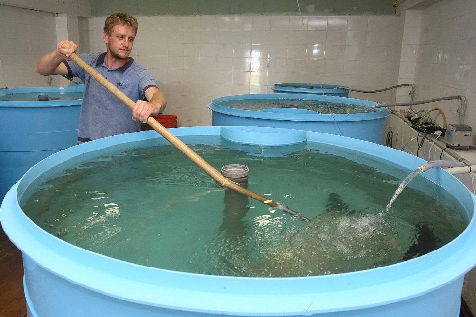 Podnik v areálu bývalé čističky odpadních vod v Pisárkách nabízí zájemcům například čerstvého lososa od prosince loňského roku.