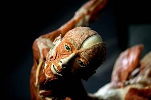 Na Výstavišti v Brně bude od 10. května otevřena expozice o lidských tělech z evropské dílny vynálezce plastinace Gunthera von Hagense.