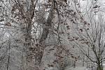 Procházka kolem řeky v brněnském Komárově.
