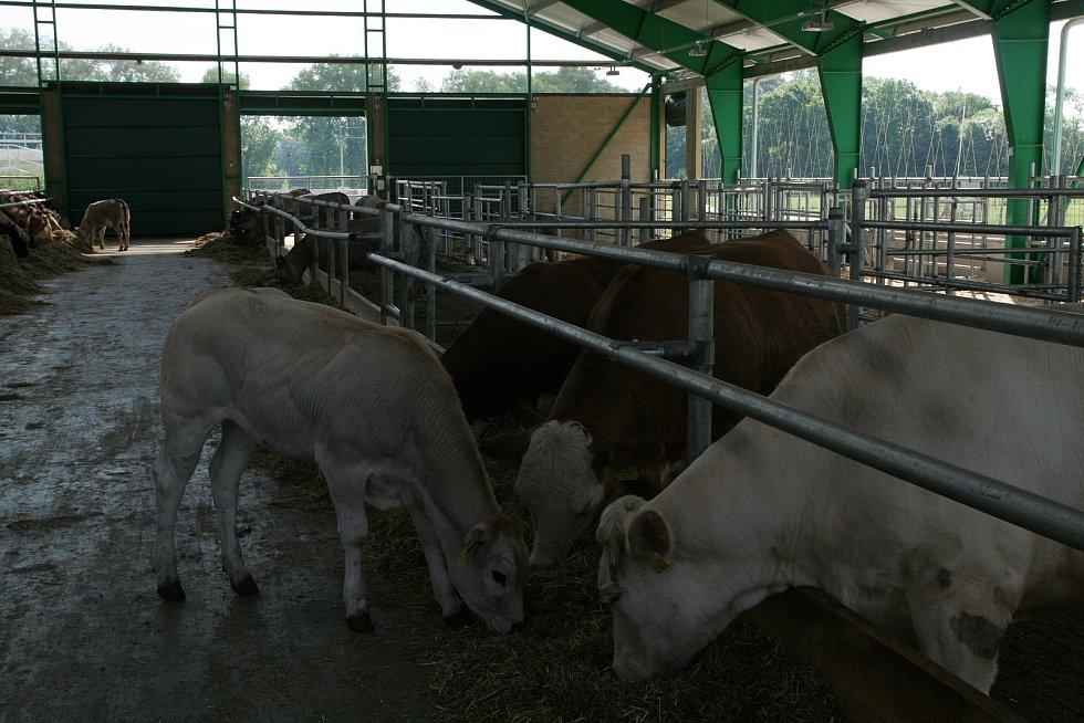 Nový moderní kravín v Školním zemědělském podniku Žabčice.