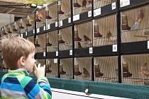 Výstava exotického ptactva a morčat v brněnské botanické zahradě.