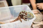Na výstavě Aquatera si mohli lidé exotická zvířata prohlédnout i koupit.