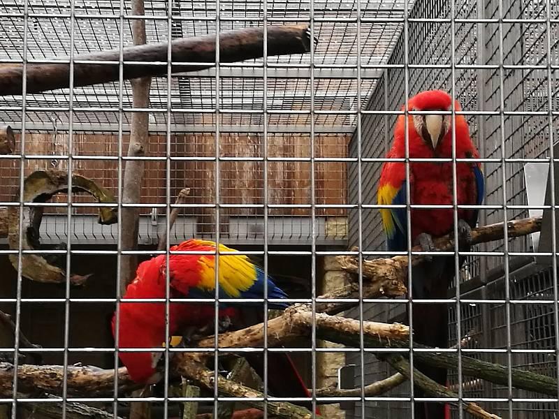 Papouščí zoo Bošovice.
