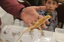 V Brně se konala tradiční terarijní burza Fauna Hobby. Lidé zde sehnali například ještěrky, hady či pavouky.