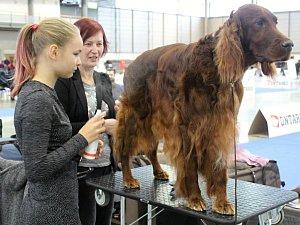 Hanácká národní výstava psů
