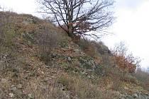 Hynčicovy skály patří svou rozlohou mezi nejmenší chráněná území v kraji. Pro lokalitu jsou charakteristické nízké keřové porosty. Roste tam například třešeň křovitá, ptačí zob obecný, růže šípková, brslen evropský, trnka obecná a řešetlák počistivý.