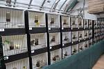 Pestrobarevné ptáky nebo morčata si můžou od pátku zakoupit návštěvníci v Botanické zahradě Přírodovědecké fakulty Masarykovy univerzity v Brně. S chovem jim poradí odborníci na místě. K vidění jsou také chameleóni, pavouci nebo obří brouci.