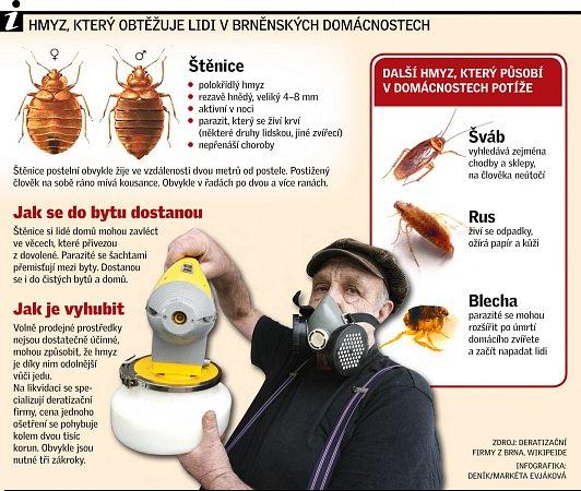 Hmyz, který obtěžuje lidi vbrněnských domácnostech