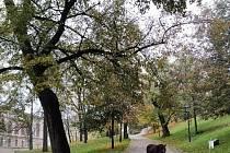 O příjemné zpestření procházky na Špilberku se postaral poník.