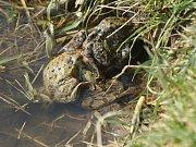 Okolí Žebětínského rybníka s žábami.