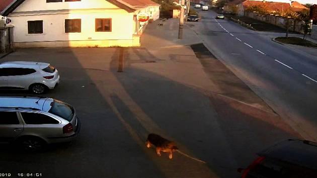 Majitel svého psa připevnil na autolano a táhl ho s autem za sebou.