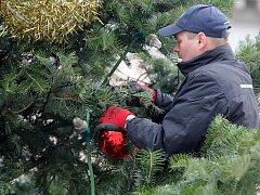 Jedle, kterou si Brňané zvolili v hlasování o vánoční strom, je už bez ozdob.