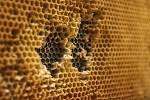 Vrátit se o sto let zpět do historie včelařství mohou od pátku návštěvníci výstavy Včelařství dříve a dnes na úřadě Jihomoravského kraje v Brně.