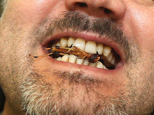 Na Mezinárodním stavebním veletrhu se v pátek podávaly speciální hmyzí pochoutky.