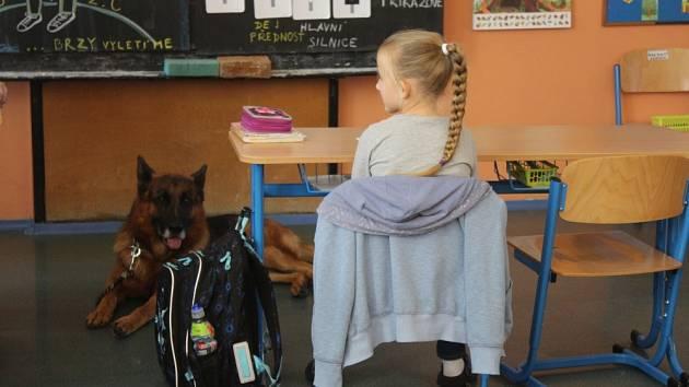 Kdopak by se psa bál. Jak se nenechat pokousat psem učí školáky nový projekt