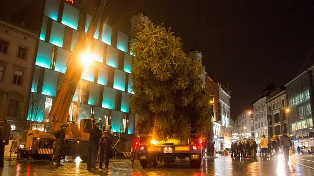 Vánoční strom už stojí na náměstí Svobody.
