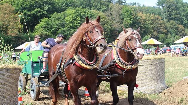 Vozatajské závody přilákaly v sobotu do Rosic na Brněnsku okolo dvě stě padesáti lidí. Fandili poníkům i tažným koním.