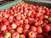 Jablek je málo, jejich cena poroste