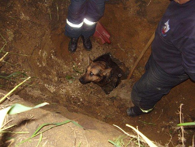 Hasiči zachránili psa z podzemí.