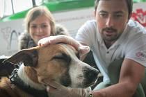 Milada Váňová z brněnských Řečkovic se rozhodla pomáhat psům bezdomovců. V úterý dopoledne pro ně proto uspořádala na Kraví hoře první setkání, kde psy veterináři dobrovolníci prohlédli, odčervili a dali jim i obojky proti blechám, klíšťatům a komárům.