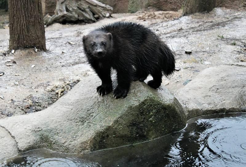 Štědrý den v brněnské zoo.