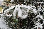 Centrum Brna zasypal sníh. Na snímku vánoční strom náměstí Svobody.