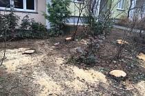 Firma Astra Lednice bez povolení porazila stromy ve dvou židenických ulicích. Svou chybu uznala a již vysadila nové.