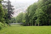 Wilsonův les v Brně - ilustrační fotografie.