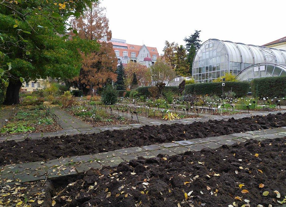 Vzácný lanýž zimní nalezený v botanické zahradě brněnské Masarykovy univerzity.