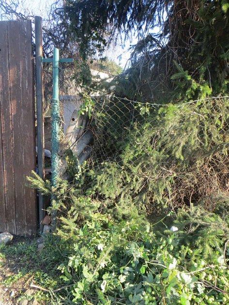 VIvančicích zloděj ukradl jeden a půl kubíku dřeva