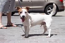 Psy pálí horký chodník v letních dnech do tlap.