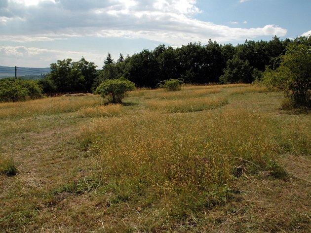 Rezervace Kamenný vrch se nachází mezi brněnskými Kohoutovicemi a Novým Lískovcem.