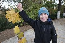 Poznat stromy, přiřadit k nim listy nebo z nich vytvořit obrazce mohli v pondělí odpoledne návštěvníci Slavnosti padajícího listí v Brně.