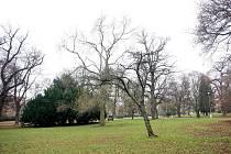 Park Lužánky. Ilustrační foto.