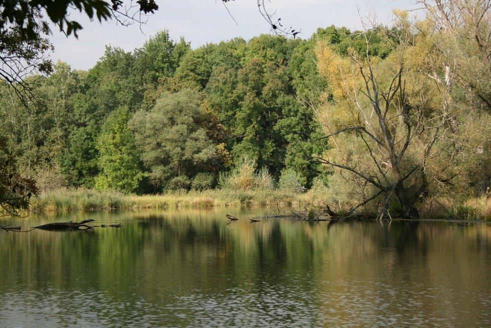 Díky národní přírodní rezervaci Křivé jezero si ještě dnes lidé mohou udělat představu, jak vypadala před čtyřiceti lety krajina pod Pavlovskými vrchy. Většinu lužního lesa tam ale zničila výstavba novomlýnských nádrží.