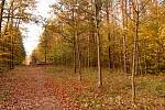 Alej Na kněží hoře kopíruje žlutou turistickou trasu na odbočce z cesty ze Soběšic do Útěchova. Kaštanová alej je v těsné blízkosti smíšeného (hlavně bukového) lesa, které je místem klidu, oddechu a čerpání energie pro mnoho lidí z okolí.