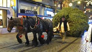 Vánoční strom už stojí na brněnském náměstí Svobody