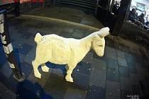 Tři recesisté ukradli kozu z betlému. Chtěli s ní natočit video.