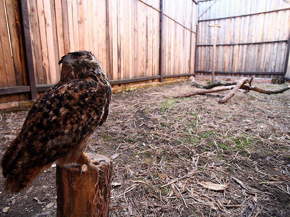 Rajhradská stanice má za sebou hodně náročnou sezonu. Tentokrát v ní přes zimu pečovali o dvaasedmdesát zesláblých a vysílených ptáků. Je to čtyřikrát víc než před rokem.