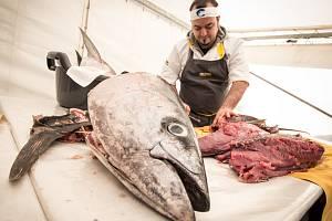 Rekordní počet tuňáků se v sobotu za slunečného počasí objevil za Lužánkami poblíž hotelu Bobycentrum. Krátce po jedenácté hodině dopoledne začali profesionálové hromadně porcovat devět tuňáků o délce zhruba jeden metr.