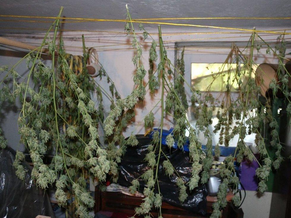 Nejdřív policisté vyjížděli do činžovního domu v Brně kvůli oznámení o úniku plynu. Místo toho našli pěstírnu marihuany a tři pytle konopí.