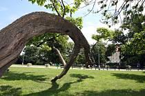 Park na Moravském náměstí.