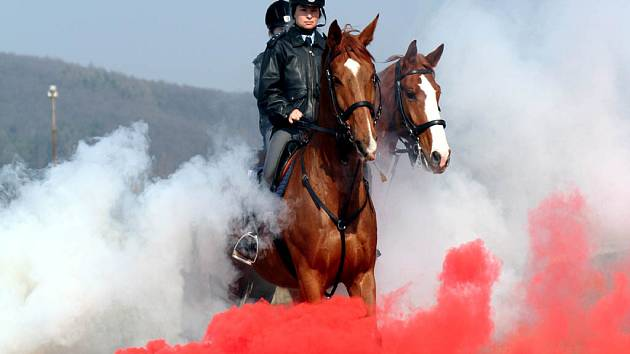 Brněnská policie jako jediná na jižní Moravě využívá koně.