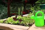 Pečovat o rostliny, sklidit ovoce, přičichnout si k bylinkám. V terapeutické zahradě mohou nově relaxovat klienti Domova pokojného stáří v brněnské Kamenné čtvrti.