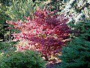 Výstava Barvy podzimu v Botanické zahradě a arboretu brněnské Mendelovy univerzity.