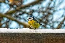 Pozorování ptáků na krmítkách je příjemná i poučná záliba.