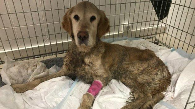 Zbídačený pes v Řečkovicích: vystouplá žebra, život v kotci bez jídla a vody