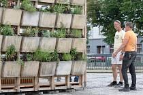 Brno 16.6.2020 - městská samozávlahová buňka u hlavního vstupu na brněnské výstaviště